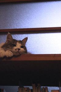 11_catBlue.jpg