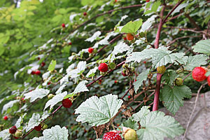 12_Strawberry1.jpg